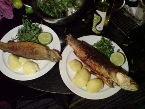 Fisch Forelle Ombre