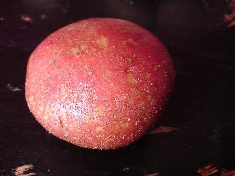 Laura Kartoffel rot mit Wasser benetzt