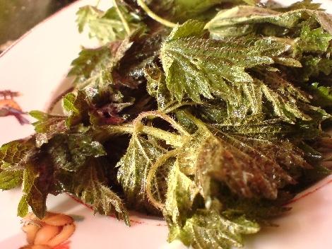 brennnesseln in salatlicher vervollkommnung