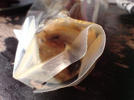 eingelegte makrele in verpackung