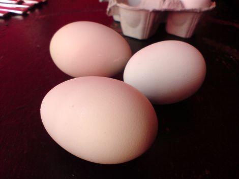 gruene eier sind etwas kompliziert zu fotografieren sie sind in natura aber wirklich leicht mintgruen