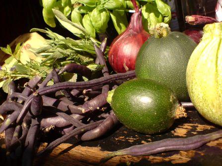 violette bohnen und klitzekleine runde zucchini und kuerbisse